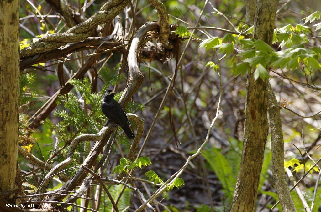 2013年5月17日 縄文の森でマミジロと遭遇_f0148627_16163854.jpg