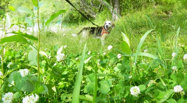 風の中に若葉や花の匂いがするね_b0005652_2230911.jpg