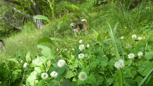 風の中に若葉や花の匂いがするね_b0005652_2236678.jpg