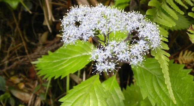 風の中に若葉や花の匂いがするね_b0005652_22394469.jpg