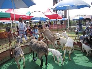 いちご動物園開園!_c0141652_1602661.jpg