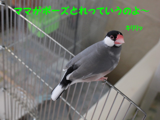 b0158061_19571472.jpg