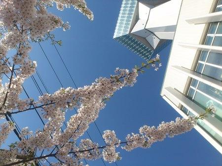 青空に五稜郭タワー_b0106766_031545.jpg