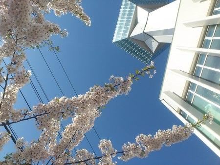 青空に五稜郭タワー_b0106766_031584.jpg