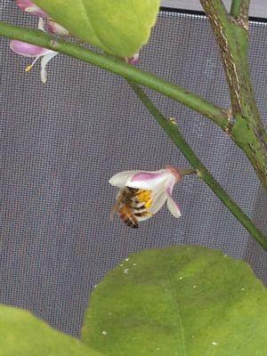 ミツバチの日参_f0134268_2350350.jpg
