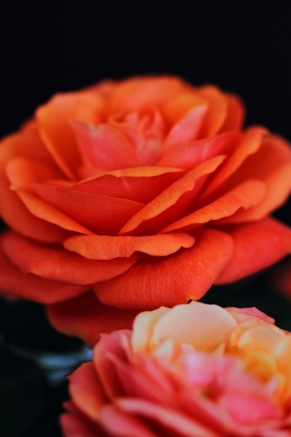 薔薇(2013.5.18)_a0049978_1744044.jpg