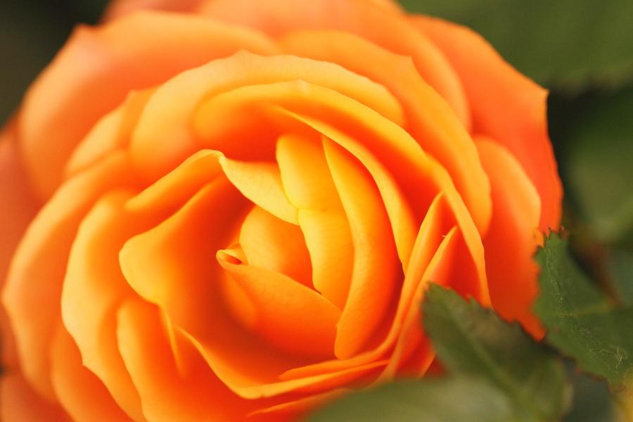 薔薇(2013.5.18)_a0049978_1745451.jpg