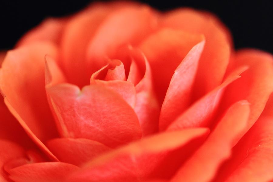薔薇(2013.5.18)_a0049978_1752076.jpg
