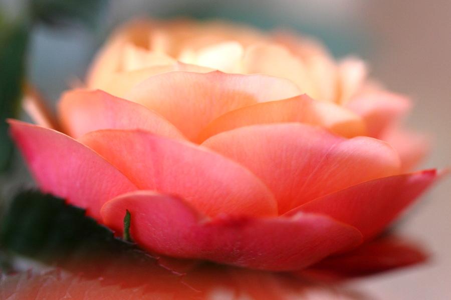 薔薇(2013.5.18)_a0049978_175267.jpg