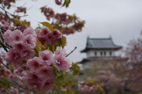 桜花繚乱_b0108779_21243282.jpg