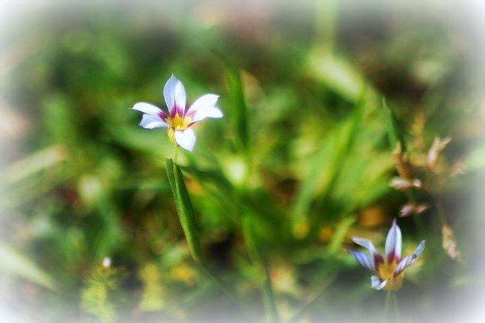 野に咲く花_c0057390_0402786.jpg