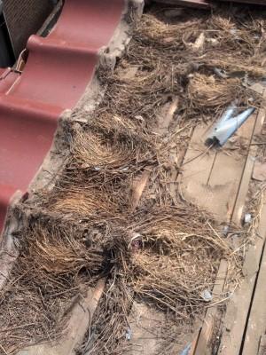 スズメ止め! 板橋区高島平で瓦屋根工事。_c0223192_217101.jpg