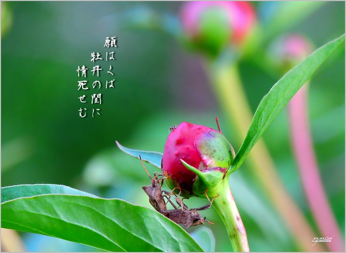 f0053297_1461328.jpg