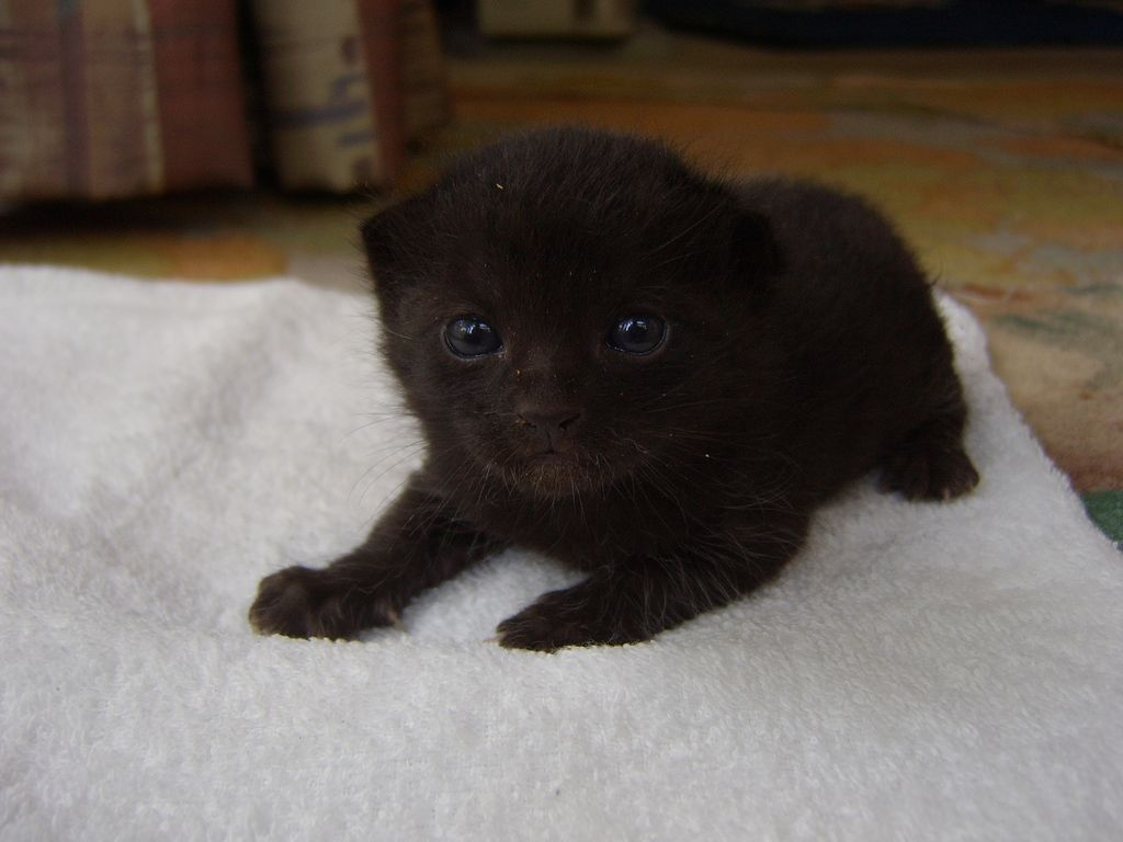 かわいい子猫_a0246407_16211523.jpg