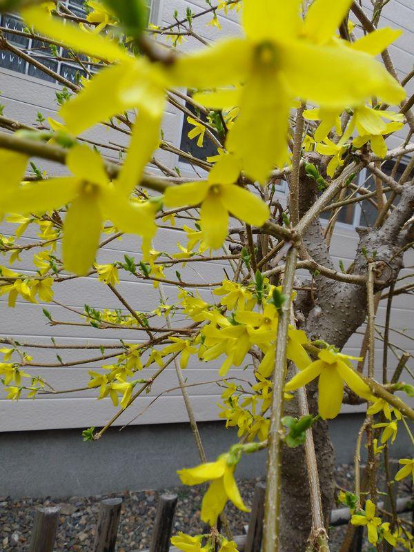 Tree of Life (生物系統樹と映画タイトル)_c0025115_22544134.jpg