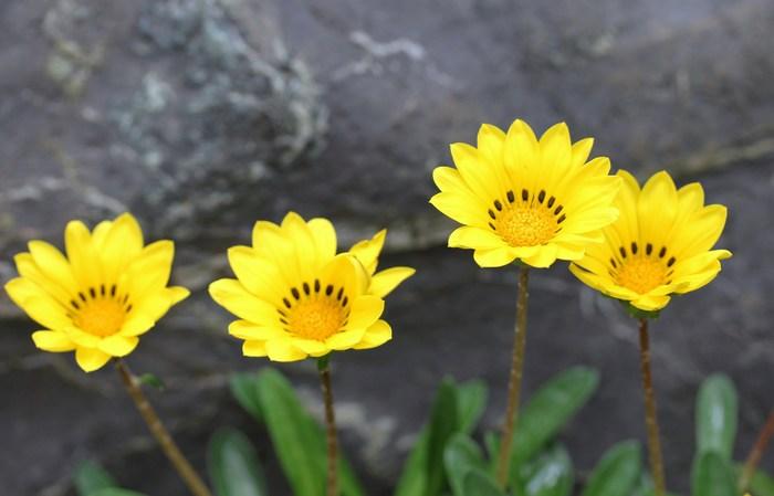 5月 庭の花だより (草花編) _d0150720_14382135.jpg