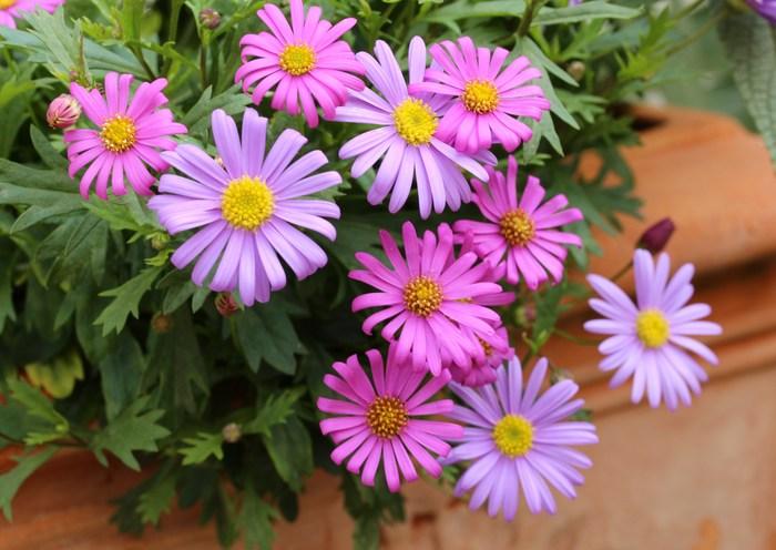 5月 庭の花だより (草花編) _d0150720_14474577.jpg