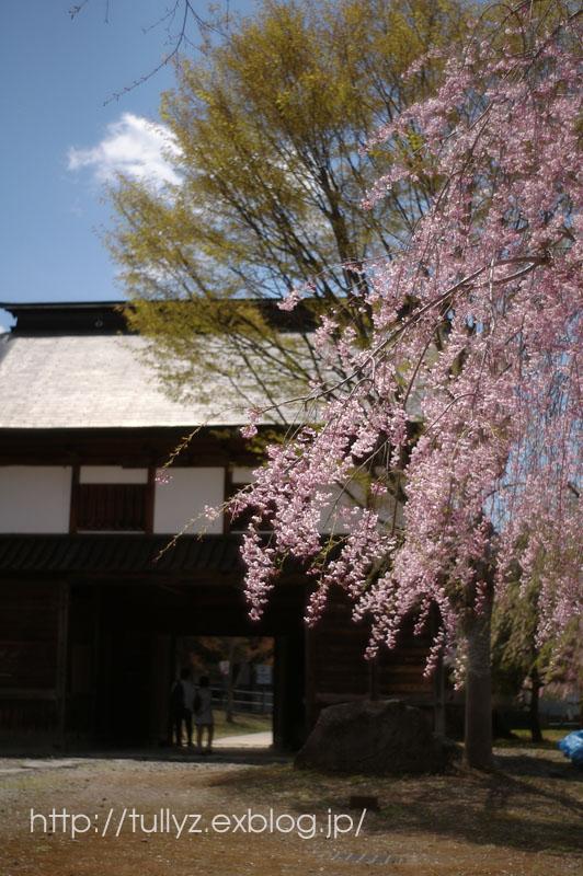 飯山の桜 (1)_d0108132_16415777.jpg