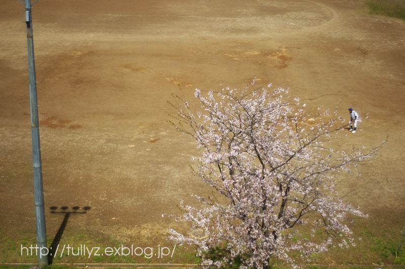 飯山の桜 (1)_d0108132_16422931.jpg