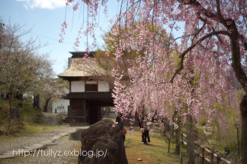飯山の桜 (1)_d0108132_1642896.jpg
