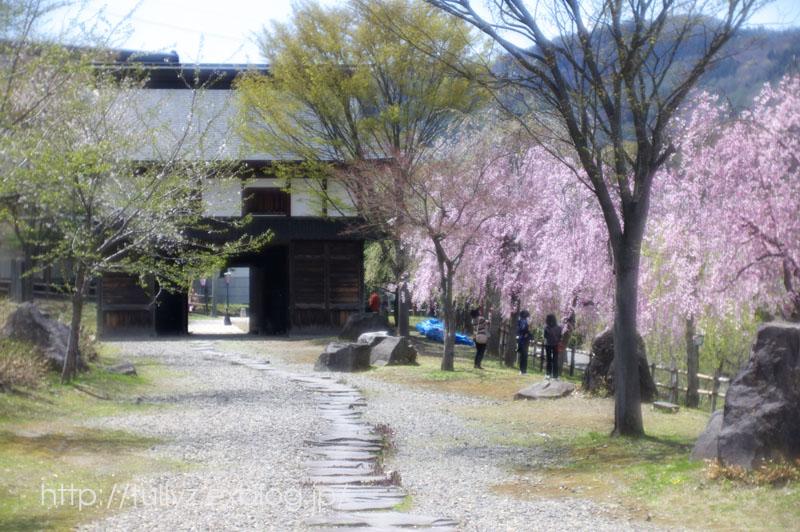 飯山の桜 (2)_d0108132_16484373.jpg