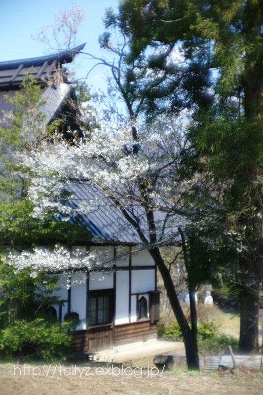 飯山の桜 (4)_d0108132_16521513.jpg