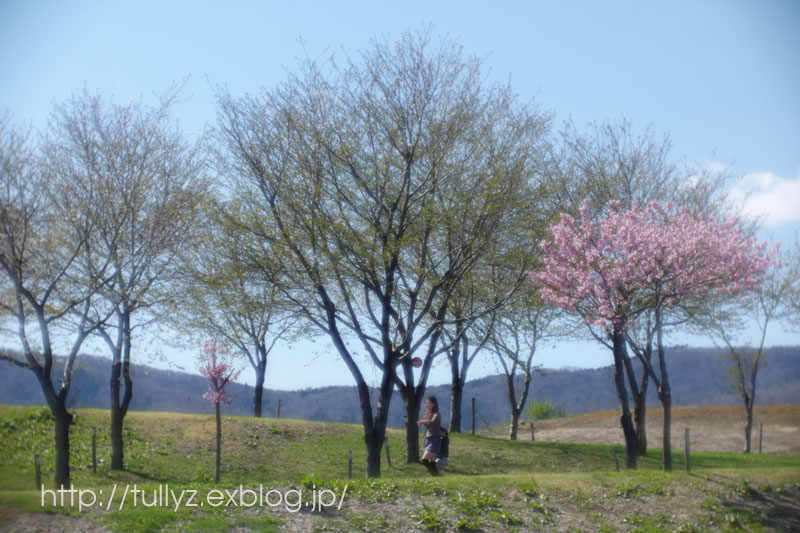 飯山の桜 (5)_d0108132_16541720.jpg