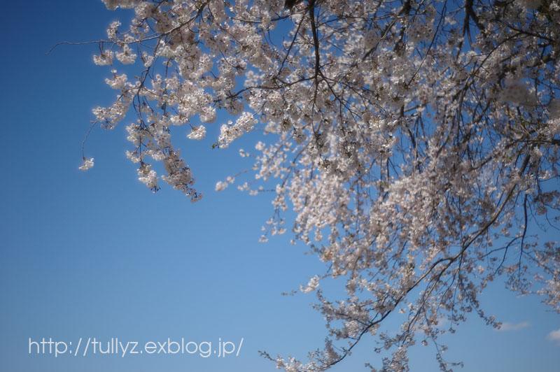 飯山の桜 (7)_d0108132_16572873.jpg