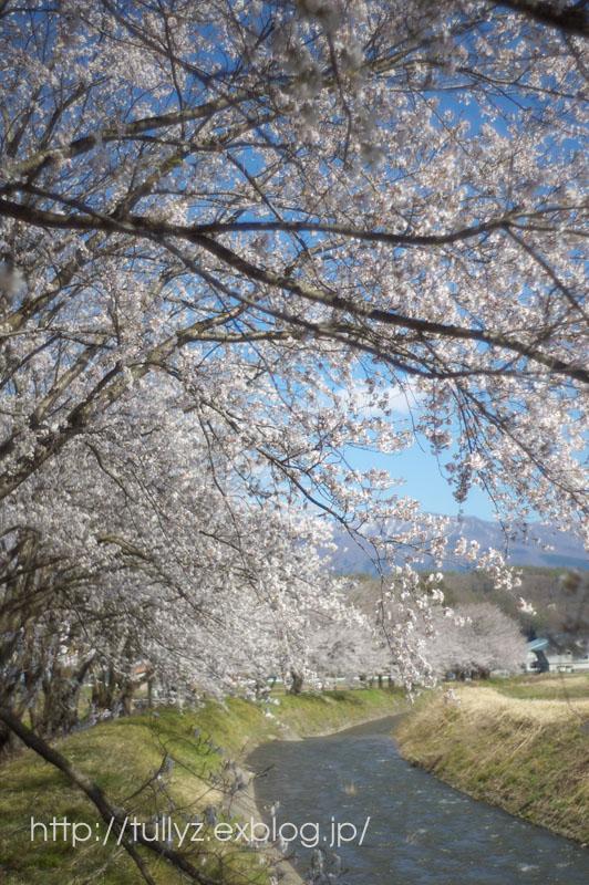 飯山の桜 (7)_d0108132_16573526.jpg