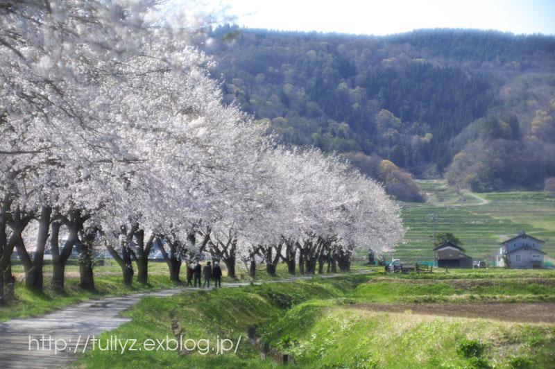 飯山の桜 (6)_d0108132_171187.jpg