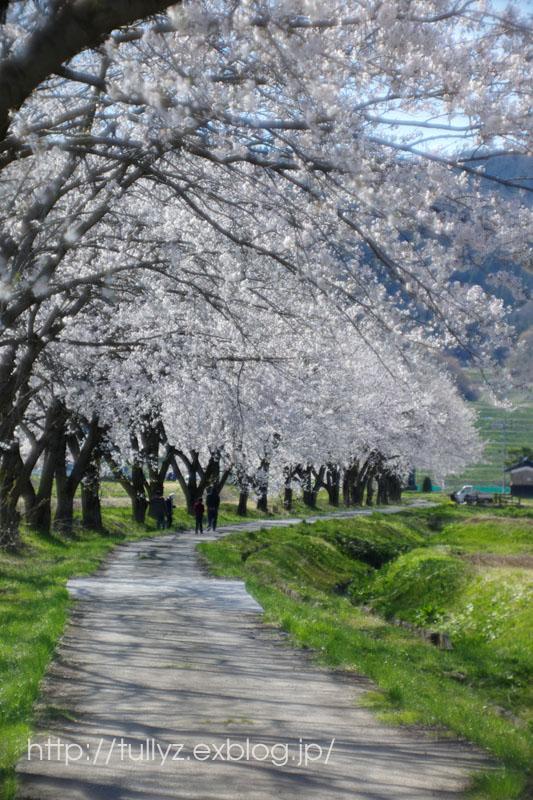 飯山の桜 (6)_d0108132_171761.jpg