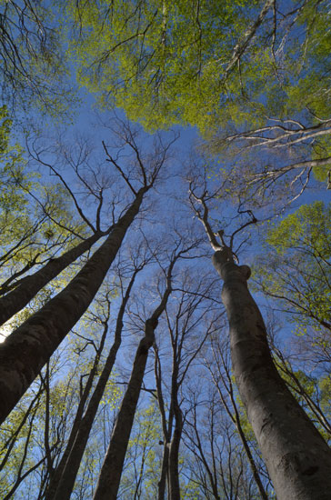 新緑のぶな林(2)_c0093046_1311214.jpg