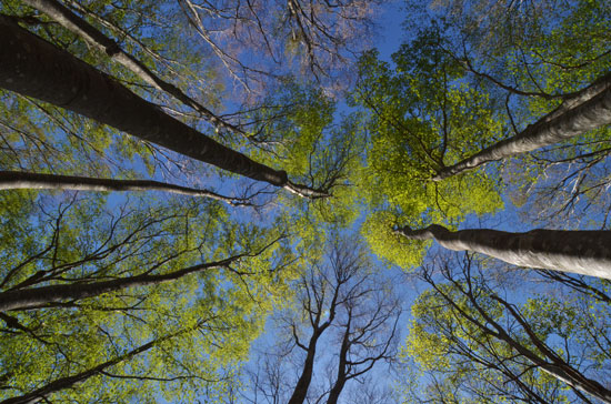 新緑のぶな林(2)_c0093046_1313116.jpg