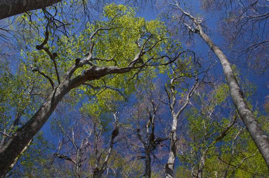 新緑のぶな林(2)_c0093046_1315128.jpg