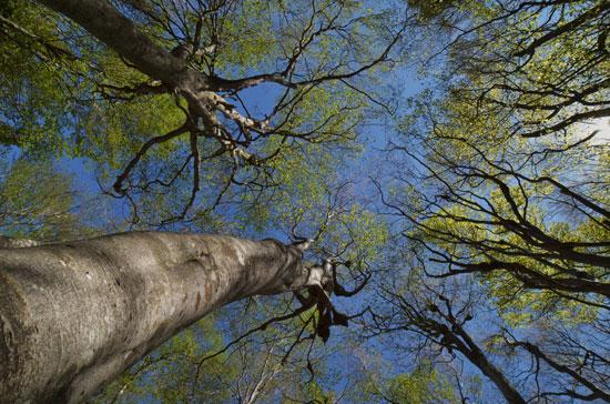 新緑のぶな林(2)_c0093046_1321120.jpg