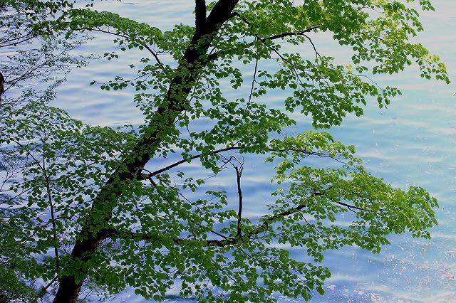 水辺の風景 6_c0155950_23103723.jpg