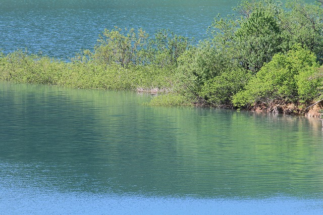 水辺の風景 3_c0155950_2363025.jpg
