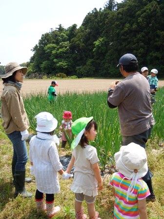 竹松農園でお野菜の収穫体験_d0298850_12452477.jpg