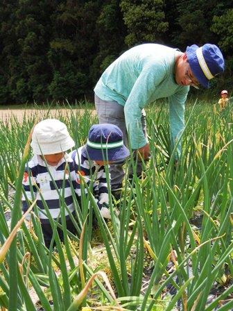 竹松農園でお野菜の収穫体験_d0298850_12475321.jpg