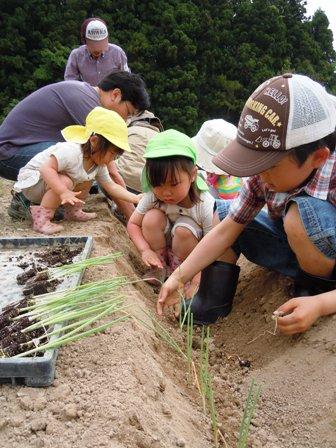 竹松農園でお野菜の収穫体験_d0298850_1343558.jpg