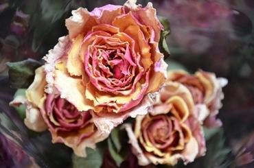 ココロくすぐる花たち。_b0192257_20513879.jpg
