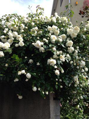 My Garden_a0163160_21182757.jpg