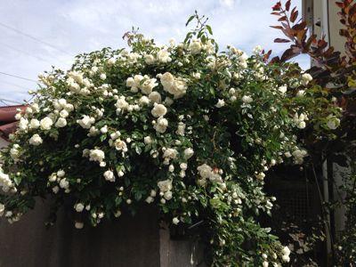 My Garden_a0163160_21182833.jpg