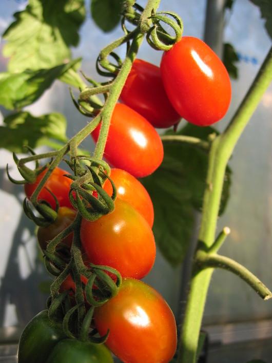 野菜苗の販売_a0292194_21521374.jpg
