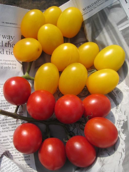 野菜苗の販売_a0292194_2224455.jpg