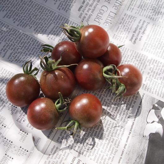 野菜苗の販売_a0292194_22254840.jpg