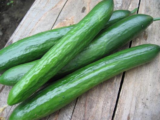 野菜苗の販売_a0292194_231388.jpg