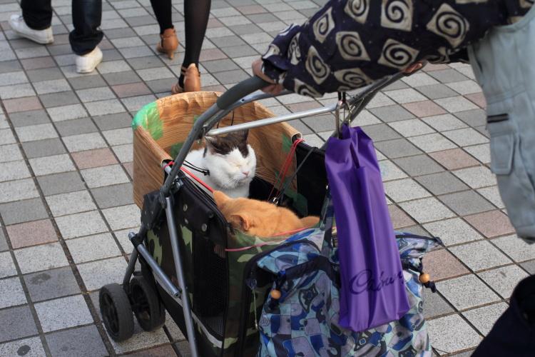 上野  弁天堂のネコ with 乳母車おやじ_b0061717_1361072.jpg
