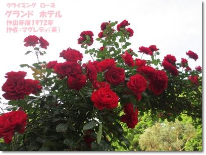 b0167519_22494851.jpg