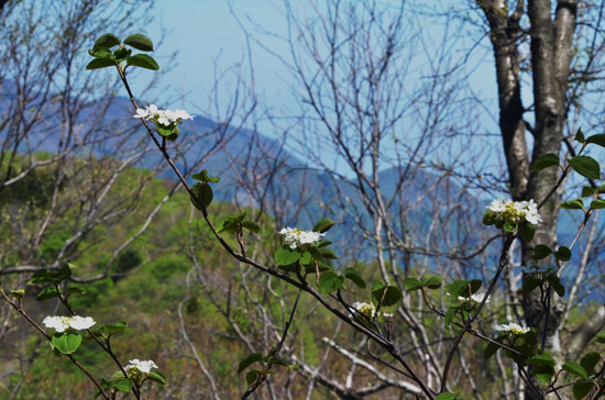 新緑のぶな林(3)_c0093046_628301.jpg